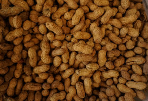 food allergy or intolerance